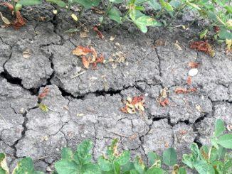 Clima: Coldiretti, calamità in 11 regioni per estate dei record