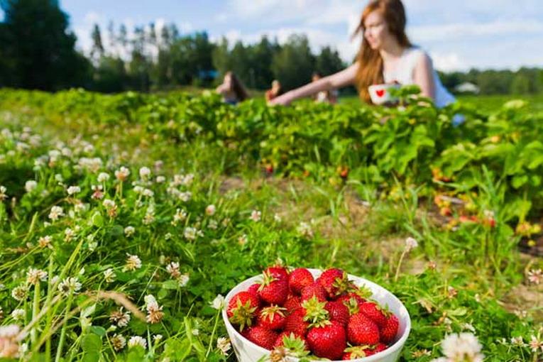 """Legambiente: """"L'agricoltura sostenibile può essere un prezioso alleato per la lotta ai cambiamenti climatici e per incentivare un'economia sostenibile"""""""