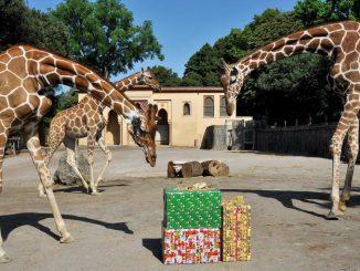 Bioparco di Roma promozione speciale in occasione delle feste