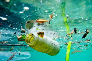 Difendi il tuo mare da un mare di plastica, il 28 gennaio sulle spiagge di Ladispoli