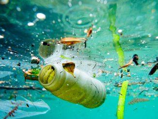 Difendi il tuo mare da un mare di plastica, il 28 gennaio a Ladispoli