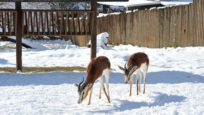 Il Burian non fa paura agli animali del Bioparco di Roma