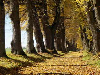 Verde, a Roma torna #alberiperilfuturo domenica 11 febbraio