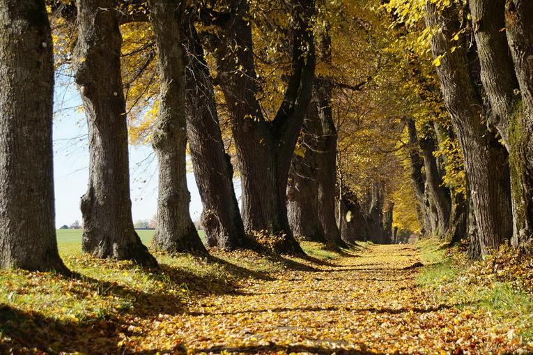 Verde, a Roma torna #alberiperilfuturo. Secondo appuntamento di forestazione urbana