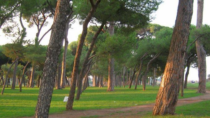 Parco Regionale del Pineto, verde, animali e reperti archeologici