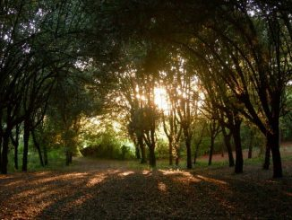 Parco di Villa Glori, il parco romano dove si allenava Mennea