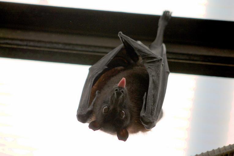 Grotta di Cocceio, ottime le condizioni per la vita dei pipistrelli