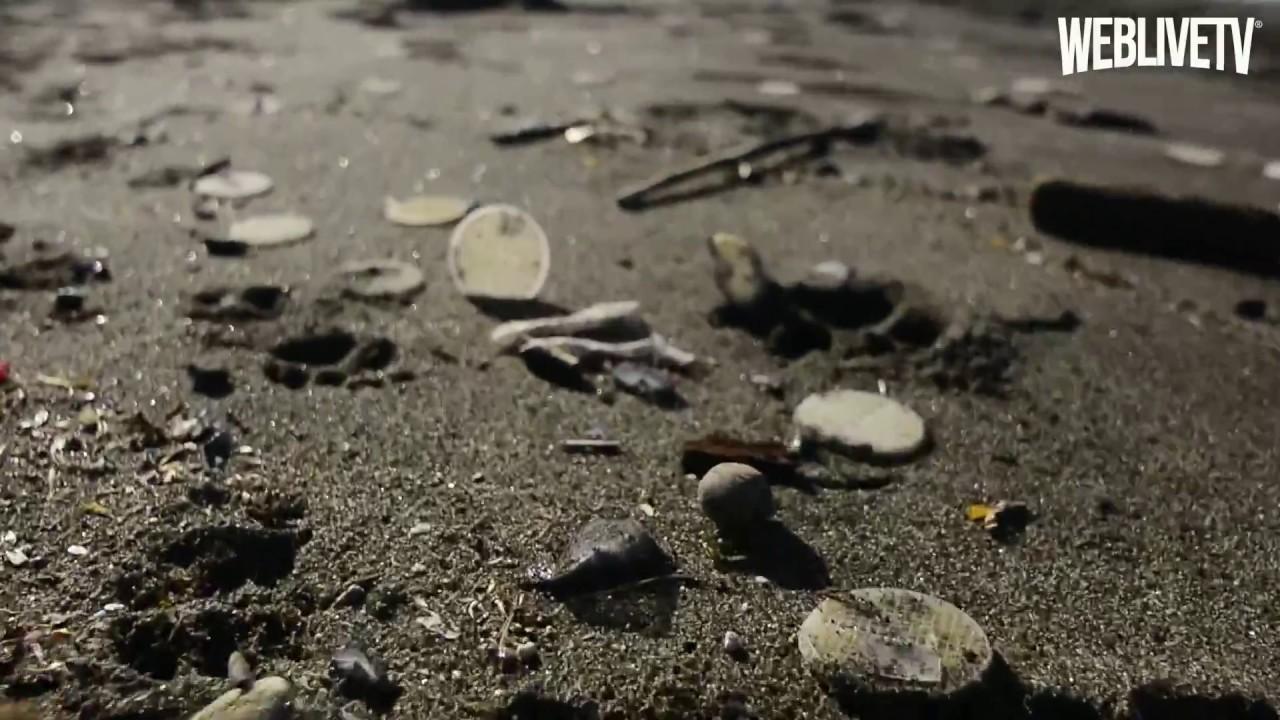 Dischetti di plastica sulle spiagge, cosa sono? Da dove arrivano?