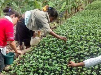Nicaragua, 130mila alberi da qui al 2020 per compensare le emissioni della CO2