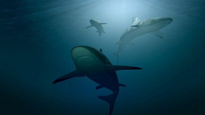 Shark finnig, una pratica barbara che uccide atrocemente gli squali