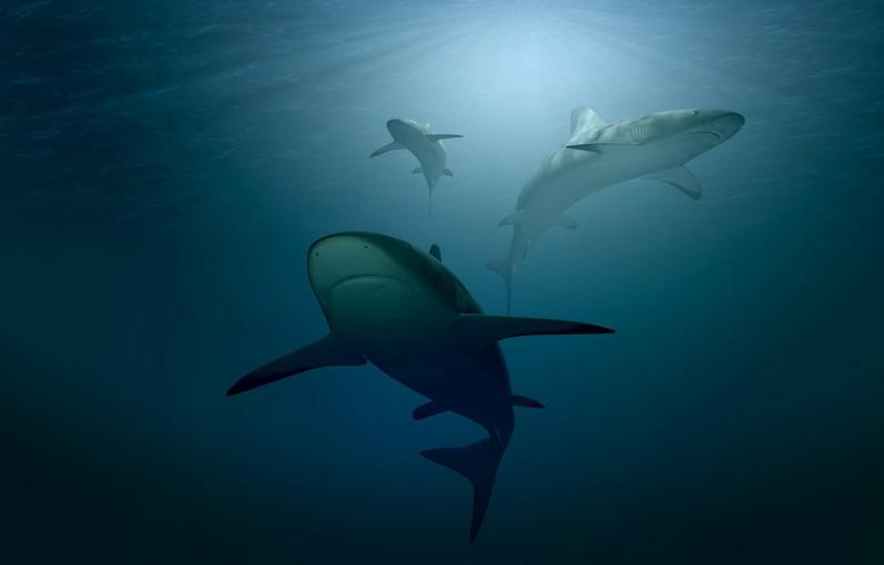 Shark finning, una pratica barbara che uccide atrocemente gli squali