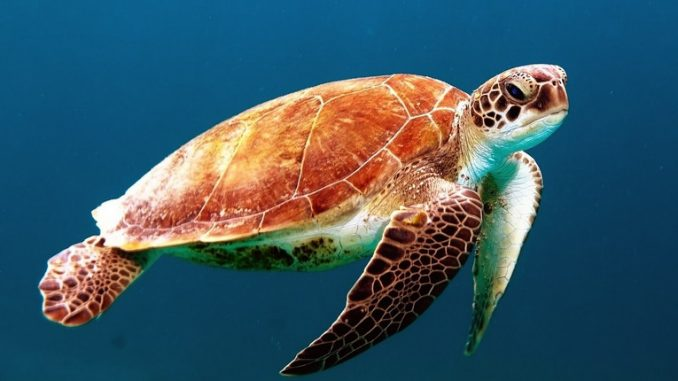 Pronto Soccorso del mare, Zoomarine salva 3 tartarughe spiaggiate