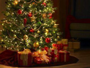 L'8/12 arrivano alberi di Natale dai boschi distrutti
