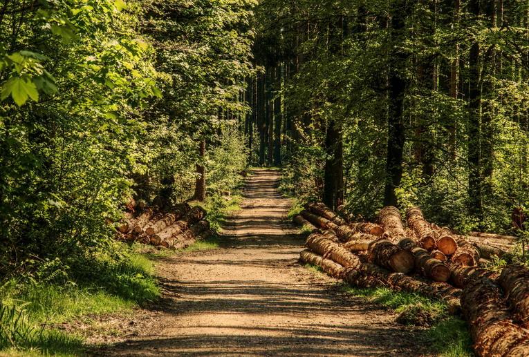 Passeggiare nei boschi? Fa bene, ma se non siete pratici fate attenzione