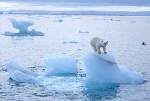 Oceani sempre più caldi, ghiacciai diminuiti di un terzo