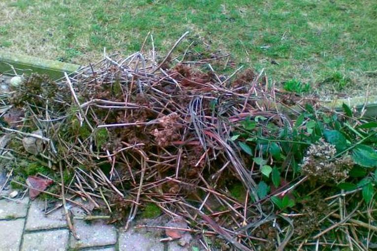 Raccolta differenziata: piante e sfalci dove si buttano