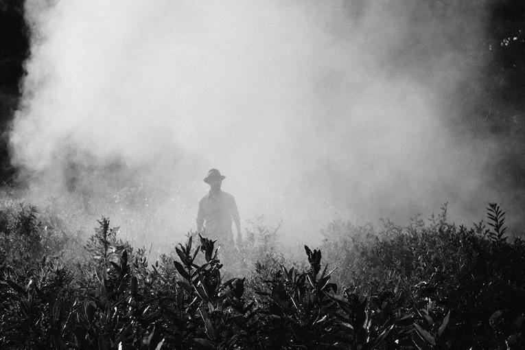 Pesticidi, dove si possono acquistare?
