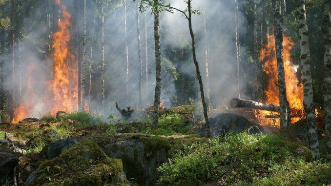 Grandi incendi