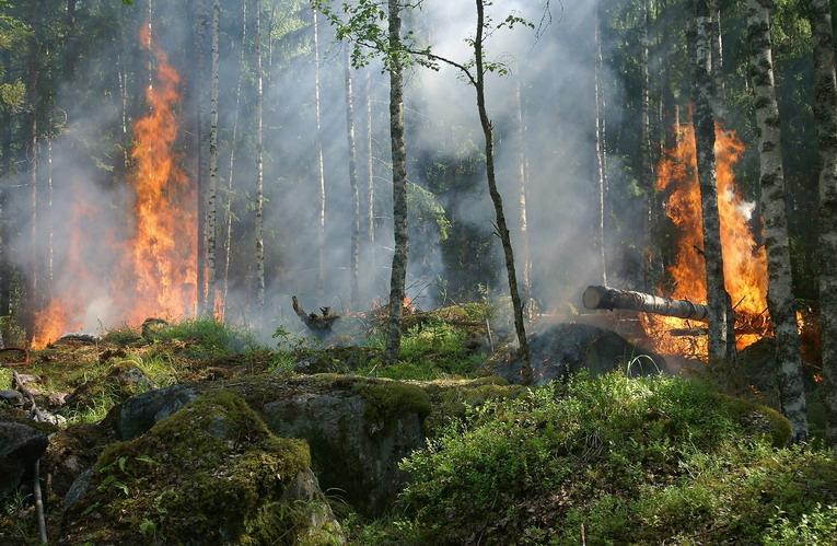 Grandi incendi, aumento drastico della CO2