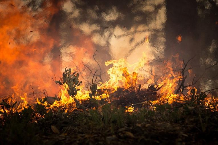 Incendi: cosa accade quando brucia una foresta
