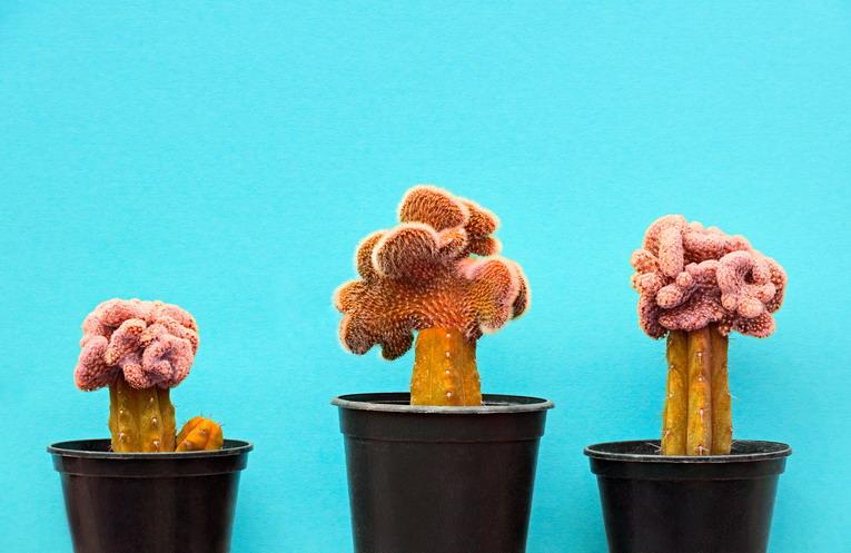 Riciclo creativo: come realizzare un cactus con materiali di recupero