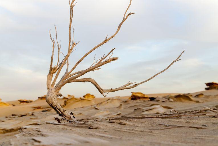 Desertificazione, problemi evidenti nel sud Italia