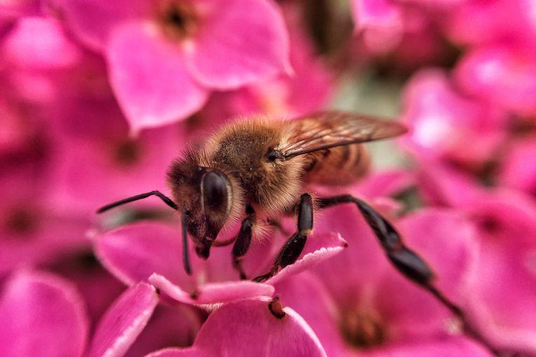 Le api, sentinelle dell'ambiente